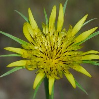 Photo - Flowers - Yellow Flower