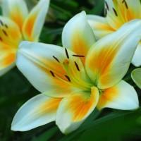 Photo - Flowers - Eden