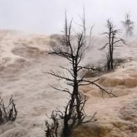 Photo - Places - Burned Tree Yellowstone