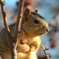 Photo - Places - Little Piggy Squirrel