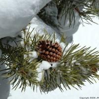 Photo - Places - Cradle Winter