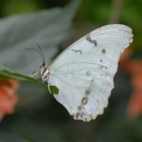 Photo - Places - Butterfly 1