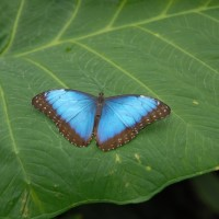 Photo - Places - Butterfly 2