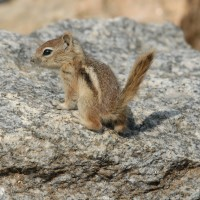 Photo - Places - Baby Chipmonk