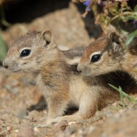Photo - Places - Siblings Chipmonks