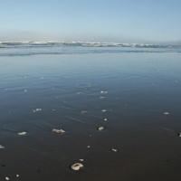 Photo - Places - Sand Dollar Beach Washington