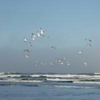 Photo - Places - Flight