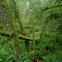 Photo - Places - Ecola Forest